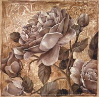 Antique Rose II