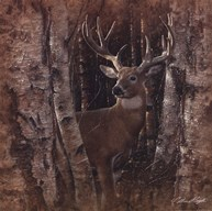 Birchwood Buck