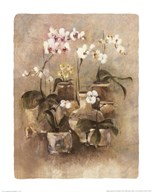Arrangement of Orchids II-11x14