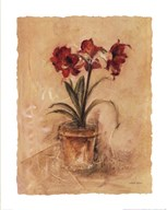 Secret Amaryllis II