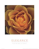Elegance - Peach Rose