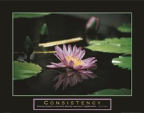 Consistency - Pond Flower