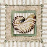 Nautilus