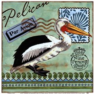 Shorebirds - Pelican