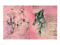 Anatomical drawing of hearts and blood vessels