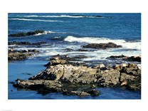 Seals on rocks at the coast, California, USA