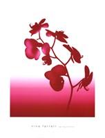 Spring Orchid Fine-Art Print