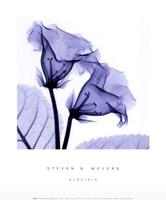Gloxina Sm Fine-Art Print
