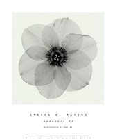 Daffodil #2 Fine-Art Print