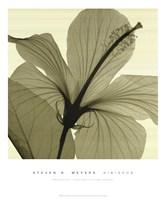 Hibiscus Fine-Art Print
