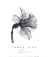 Daffodil Fine-Art Print