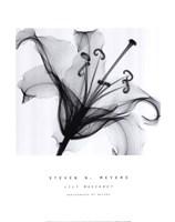 Lily Muscadet Fine-Art Print