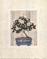Gardenia Bonsai Fine-Art Print