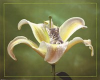 Kitten And Flower Fine-Art Print