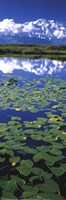 Denali National Park Fine-Art Print