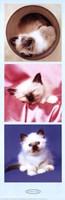 Kittens Fine-Art Print