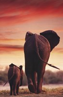Elephant Walking With Calf Fine-Art Print