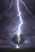 Lightning Striking a Tree Fine-Art Print