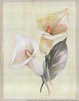 Calla Lily IV Fine-Art Print
