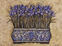 Blue Irises Fine-Art Print