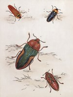 Chelsea Beetles-1 of 3 Fine-Art Print