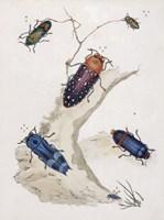 Chelsea Beetles-2 of 3 Fine-Art Print