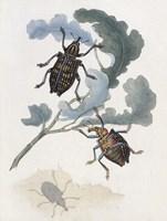 Chelsea Beetles-3 of 3 Fine-Art Print