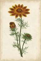 Vibrant Curtis Botanicals I Fine-Art Print