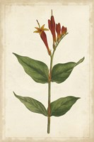 Vibrant Curtis Botanicals III Fine-Art Print