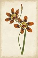 Vibrant Curtis Botanicals IV Fine-Art Print