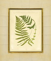 Fern with Crackle Mat (H) III Fine-Art Print