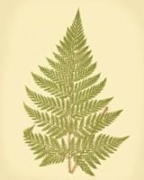 Lowes Fern I (PP) Fine-Art Print