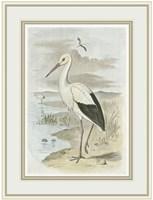 White Stork Fine-Art Print