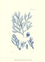 Shades of Aqua IV Fine-Art Print