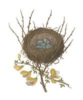 Antique Bird's Nest II Fine-Art Print