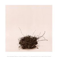 Leebas Nest Fine-Art Print