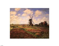 Tulip Fields with Windmill Fine-Art Print