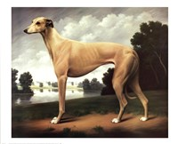 Greyhound in a Parkland Landscape Fine-Art Print