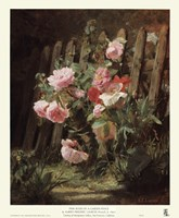 Pink Roses by a Garden Fence Fine-Art Print