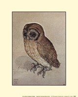 Little Owl Fine-Art Print