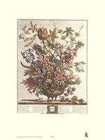 February/Twelve Months of Flowers, 1730 Fine-Art Print