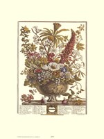 December/Twelve Months of Flowers, 1730 Fine-Art Print