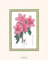 Azalea No. 3 Fine-Art Print