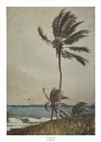 Palm Tree, Nassau Fine-Art Print