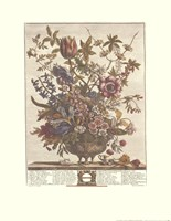 February/Twelve Months of Flowers, 1730 Fine-Art Print