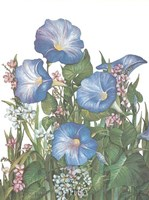 Morning Glories Fine-Art Print