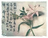 Oriental Lily Fine-Art Print