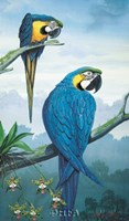 Blue and Gold Macaw Fine-Art Print