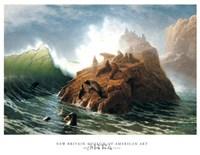 Seal Rock Fine-Art Print