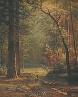 Dogwood Fine-Art Print